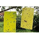 KINGLAKE® 10 PCS Dual Sided Yellow Sticky Fly Traps Paper Stickers for White Flies, Aphids, Fungus Gnats & Leaf Miners
