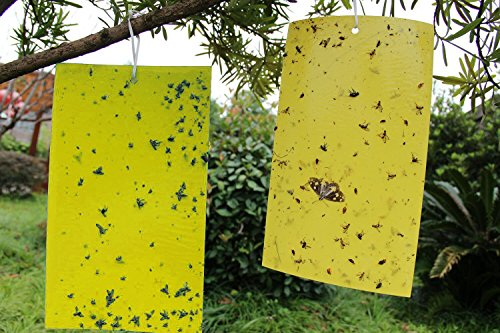 kinglake-10-pcs-dual-sided-yellow-sticky-fly-traps-paper-stickers-for-white-flies-aphids-fungus-gnat