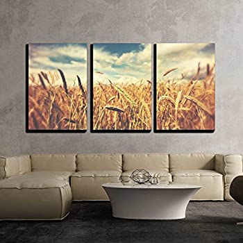 wall26 - 3 Piece Canvas Wall Art - Sunny Wheat Field - Modern Home Decor Stretched and Framed Ready to Hang - 16