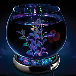 WavePoint 1236 Color Transformer LED Fish Bowl Kit, Small