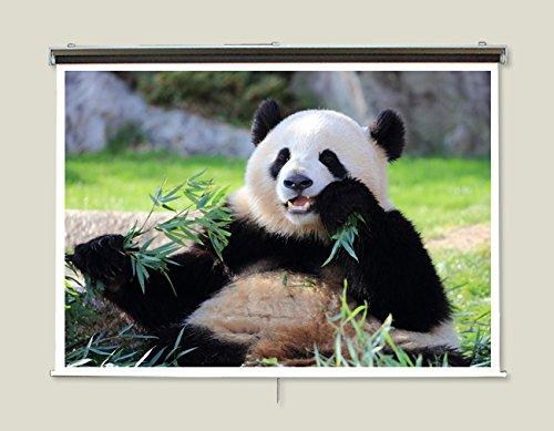 2.2倍明るいマイクロビーズスクリーン 110インチ(16:9) チェーン巻上げ型 日本製 CH-MB110W B07998WFVB