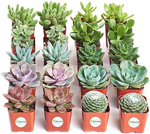 shop-succulents-assorted-collection