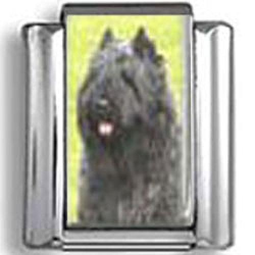 Bouvier des Flandres Dog Photo Italian Charm ()