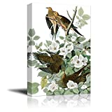 wall26 Beautiful Illustration of a Mourning Dove by John James Audubon - Canvas Art Home Decor - 12x18 inches