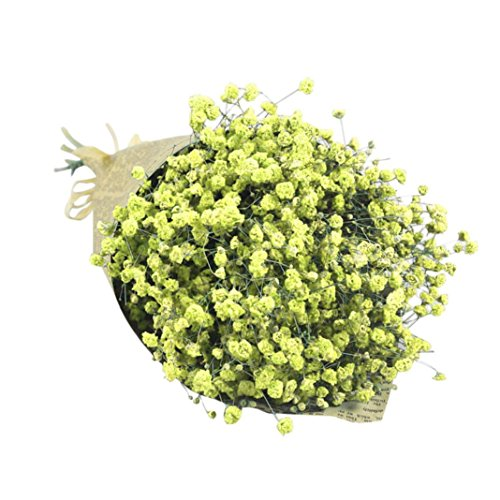Kintaz Natural Dried Gypsophila Flower Bouquet Decorative Baby's Breath Bunch Dried Blooms Home Decor Best Gift (Yellow)