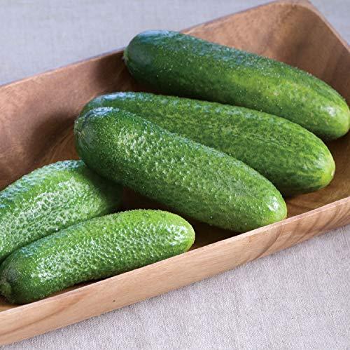 David's Garden Seeds Cucumber Pickling Harmonie SL7748 (Green) 25 Non-GMO, Hybrid -