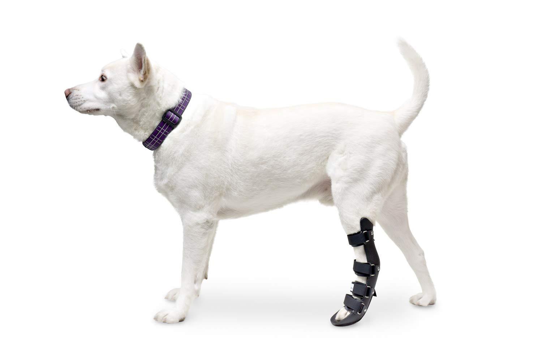 Large Walkin' Pet Splint for Dog, Canine Rear Leg