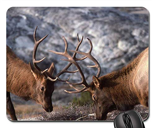 Mouse Pad - Bull Elk Sparring Wildlife Nature Outdoors 1