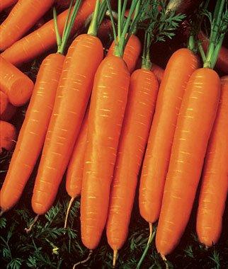 JaysseedsTM Heirloom Scarlet Nantes Carrot 200 Seeds #818 Item Upc#650348691745