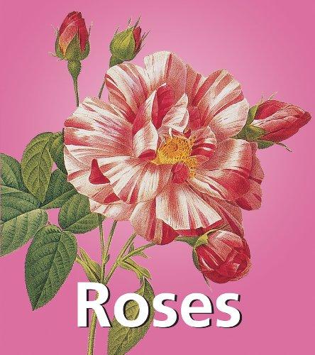 Roses (Mega Square)