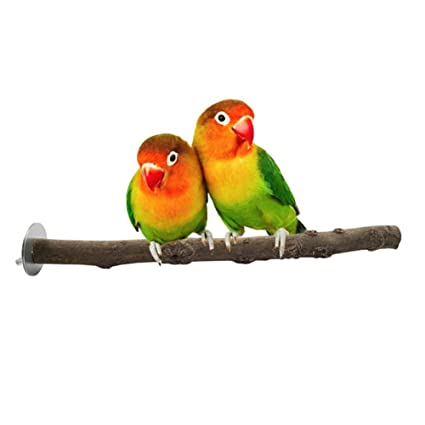Hinmay Percha de Madera para Pájaros, periquitos, periquitos, Cacatúas, Conos, jaulas, Perchas de Juguete
