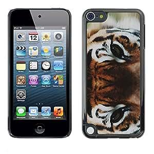 rígido protector delgado Shell Prima Delgada Casa Carcasa Funda Case Bandera Cover Armor para Apple iPod Touch 5 /Eyes Wild Cat Forest Big/ STRONG