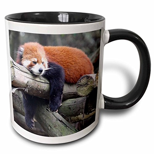 3dRose 100288_4Adorable Red Panda, Sichuan Province, China Two Tone Mug, 11 oz, Black/White
