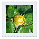3dRose Jos Fauxtographee- Blended Layers Rose on Wall - A wall with horizontal lines behind a yellow rose bud - 16x16 inch quilt square (qs_270178_6)
