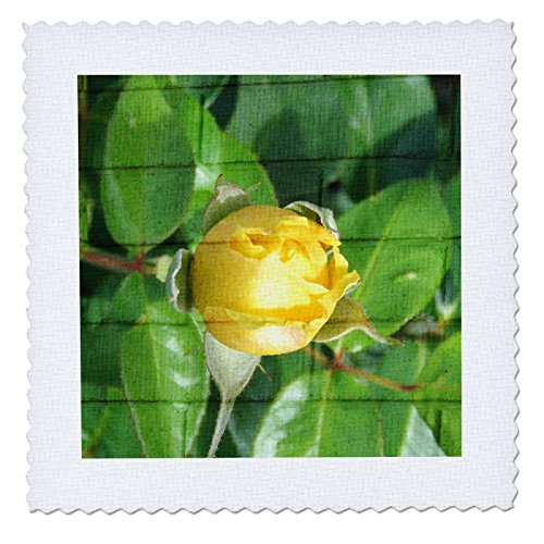 3dRose Jos Fauxtographee- Blended Layers Rose on Wall - A wall with horizontal lines behind a yellow rose bud - 6x6 inch quilt square (qs_270178_2) (X Shirt 4l)