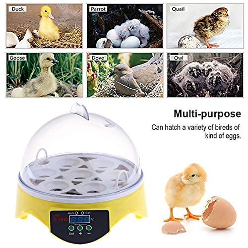 Intelligence Poultry Incubator Brooder Digital Temperature Control Hatcher for Chickens Ducks Doves and Other Birds Wiixiong Mini 7 Egg Incubator