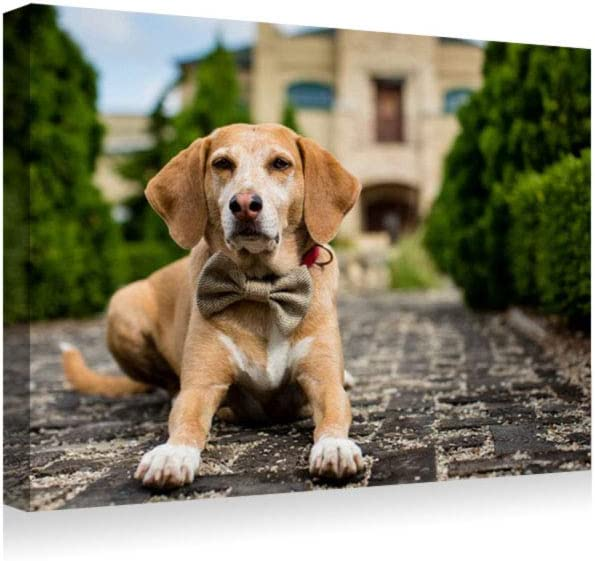 BEAGLE PUPPY DOG ANIMAL MODERN WALL ART PICTURE CANVAS PRINT READY TO HANG