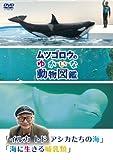Special Interest - Mutsugoro No Yukaina Dobutsu Zukan Series Iruka Todo Ashikatachi No Umi, Umi Ni Ikiru Honyurui [Japan DVD] PCBP-12143