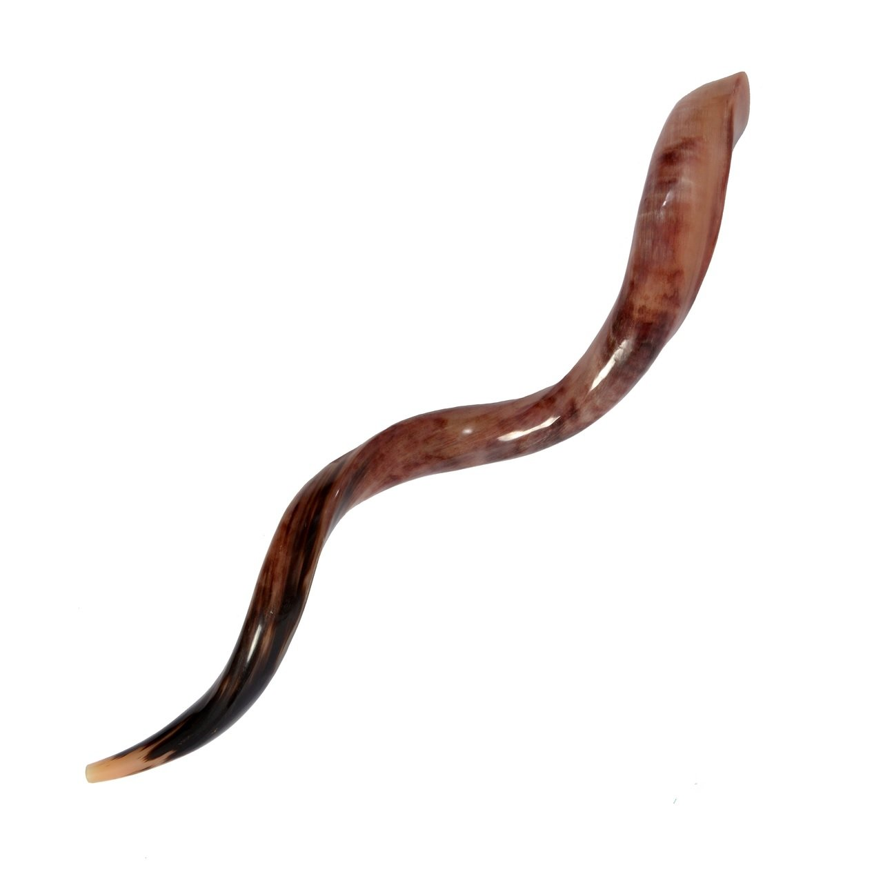 35''-37'' High Quality Yemenite Shofar Kosher & Polish + Free Bag by Kosher Factory