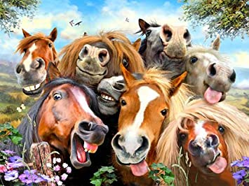 Selfie Pferde 2 Blechschild Stabil Flach Neu aus GB 30x40cm S5013