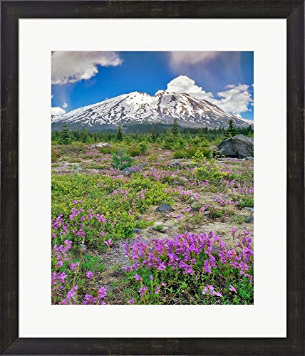 (Mount Saint Helens Landscape, Washington State by Jaynes Gallery/Danita Delimont Framed Art Print Wall Picture, Espresso Brown Frame, 21 x 24 inches)
