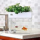 Huamuyu Hydroponic Garden Aquaponic Fish Tank