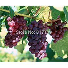New Home Garden Plant 30 Seeds Rare Giant Red Grapes Fruit Seeds