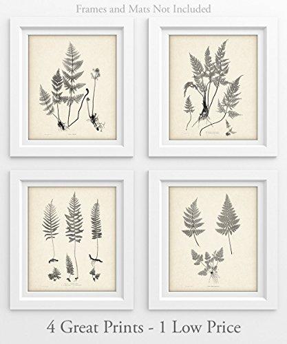 Ferns - Set of 4 11x14 Unframed Art Prints - Great Home Decor ()