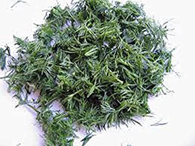 Dill Seed, Bouquet, Heirloom, Organic, Non Gmo, 100 Seeds, Herb Fresh or Dried