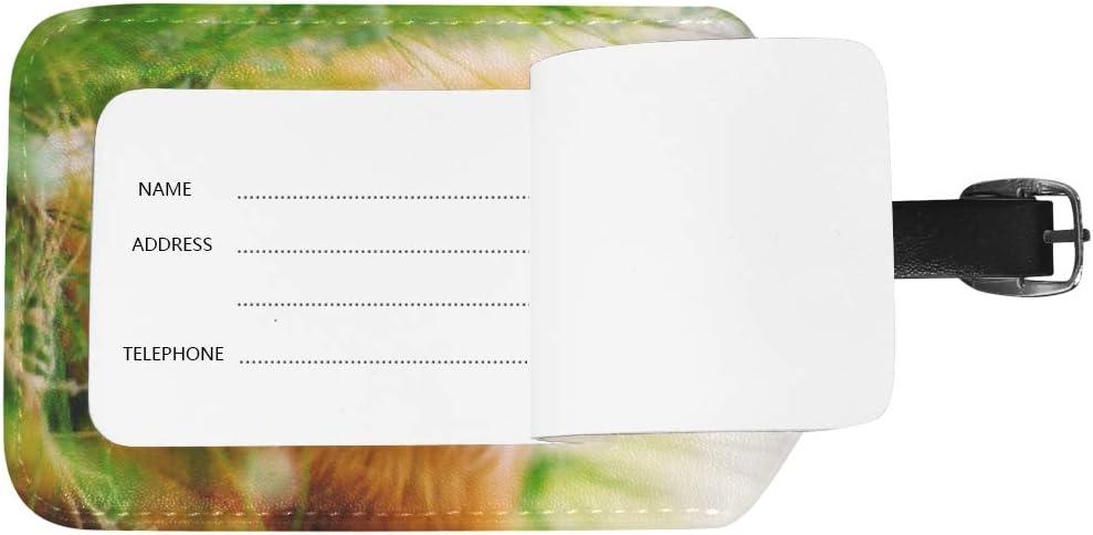 Lafle Dog Spitz in The Grass /Étiquette /à Bagages en Cuir PU pour Sac de Voyage Valise 12,5 x 7 cm