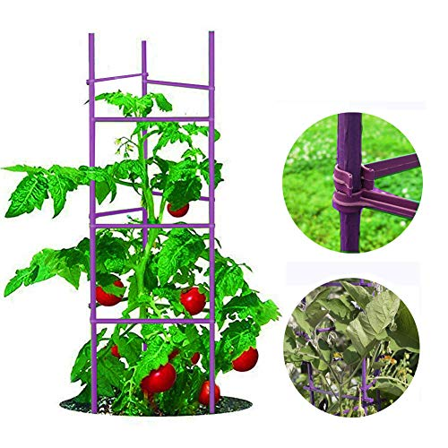 (Growsun 5-ft Purple Tomato Supports Cage Plant Garden Stakes,6 Pack)