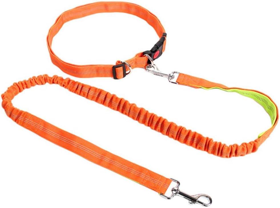 fish Pet Dog Accessories Jogging Running Elasticidad Mano ...
