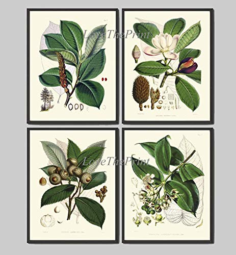 (Tree Branch Print Set of 4 Antique White Magnolia Flower Home Room Wall Art Decor Unframed FIT)