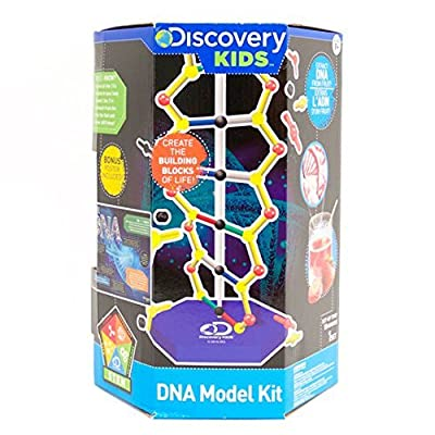 Discovery Kids DNA Model Kit: Toys & Games