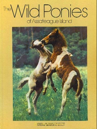 Image for The Wild Ponies of Assateague Island