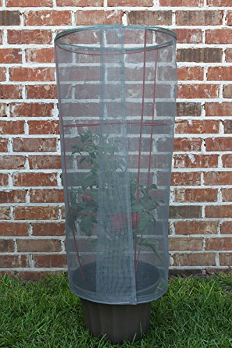 Tomato Screen Plant Protector. Blocks high winds, sun and pests.