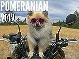 2017 Pomtastic Pomeranian Calendar, 12 Month Spiral, 11 x 18