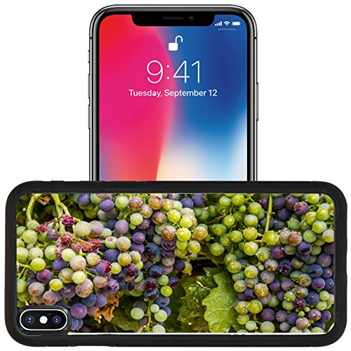 Luxlady Apple iPhone x iPhone 10 Aluminum Backplate Bumper Snap Case IMAGE ID: 44123293 Bunches of multi colored red wine grapes ripening on grapevine with water droplets on summer - Grapevine Images