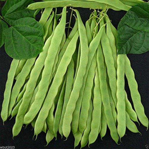 200 Kentucky Wonder 125 Bush Bean, Seeds, Organic Heirloom Bean 40-45 days (Kentucky Wonder Beans Bush)