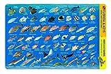 French Reef Key Largo Florida Keys Waterproof Dive Card