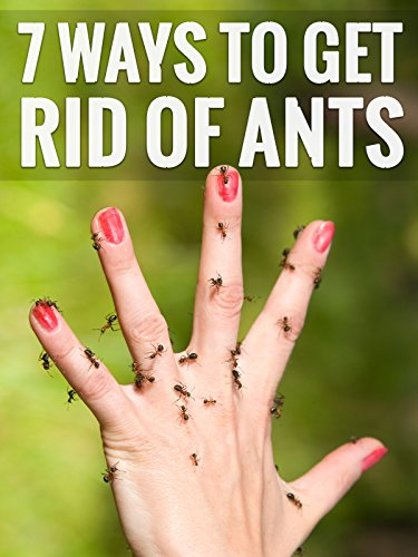 7 Genius Ways To Get Rid Of Ants (The Best Roach Bait)