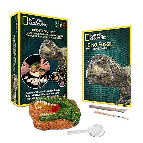 NATIONAL GEOGRAPHIC Dino Fossil Dig Kit - Excavate 3 real fossils including Dinosaur Bones & Mosasaur Teeth - Great Jurassic Science gift for Paleontology and Archeology enthusiasts of any age