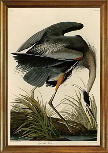 Berkin Arts Classic Framed John James Audubon Giclee Canvas Print Paintings Poster Reproduction(Great Blue Heron) ()