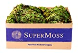 SuperMoss (21881) Royal Pool Moss Preserved, Fresh Green, 3lbs