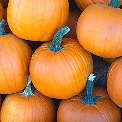 Pumpkin Garden Seeds - Sugar Pie Variety - Non-GMO, Heirloom Pumpkins - Great for Pies and Canning - Vegetable Gardening Seed