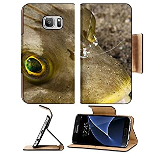 Luxlady Premium Samsung Galaxy S7 Flip Pu Leather Wallet Case IMAGE ID: 18830249 Periclimenes clean a fish at Dauin Philippines