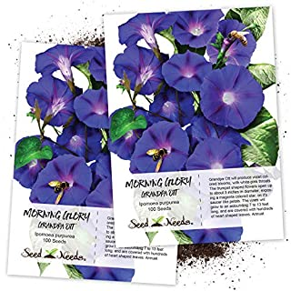 Seed Needs, Grandpa OTT Morning Glory (Ipomea purpurea) Twin Pack of 100 Seeds Each (B003ZGEAT8) | Amazon price tracker / tracking, Amazon price history charts, Amazon price watches, Amazon price drop alerts