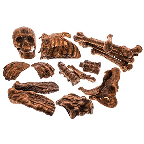 Halloween Skeleton Body Parts (Halloween Haunters 20 Piece Bag of Plastic Life Size Burnt Rotten Flesh Mummy Skeleton Skull Bones Prop Decoration - Scary Graveyard Human Realistic Corpse Body Parts Set - Hands, Feet,)