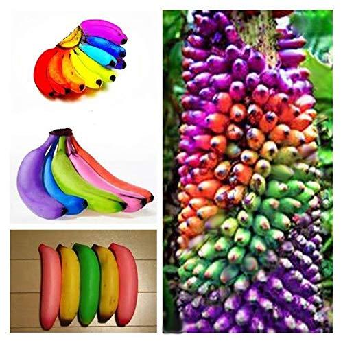 Ornamental Trees Fruit - LOadSEcr's Garden 100Pcs Rainbow Banana Tree Seeds Delicious Bonsai Fruit Non-GMO Ornamental Plants Yard Office Decoration, Open Pollinated Seeds
