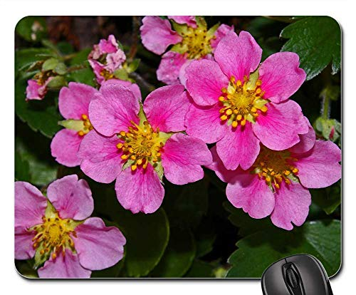 Mouse Pad - Ground Cover Ornamental Strawberry Strawberry 1